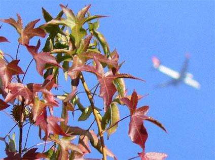 """""""Taking Flight"""". Photo: Ken Banks"""