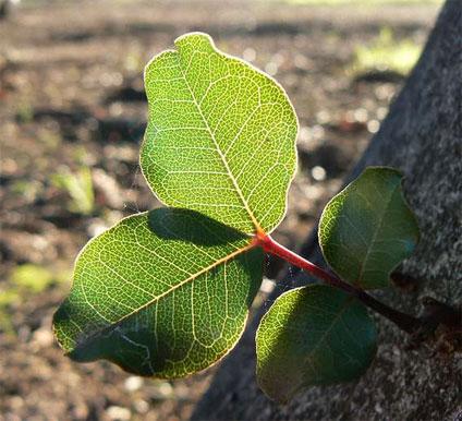 """""""Branching Out"""". Photo: Ken Banks"""
