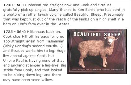 """Beautiful Sheep"""